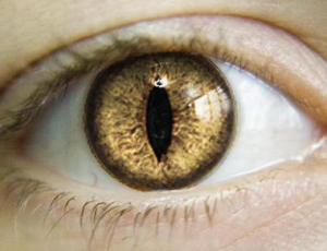 reptilian_eyes